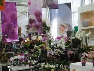 piante verdi e piante fiorite