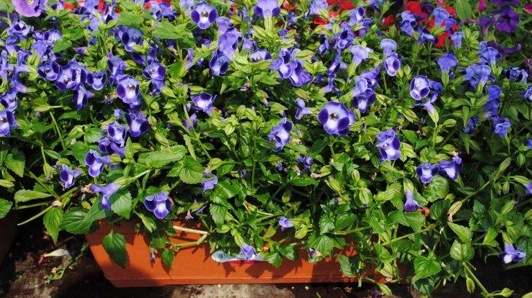 Piante per balconi e terrazzi - Nichelino, Torino - Garden Center ...