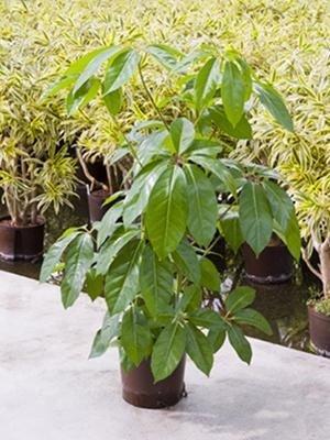 piante verdi da appartamento per Idrocultura