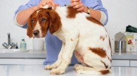 veterinaria Monteroni D' Arbia