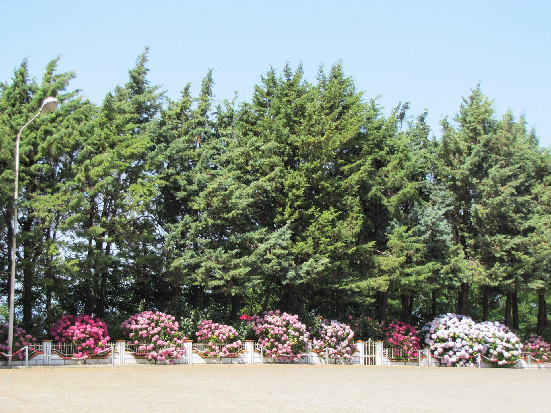 vista di un giardino con alberi e fiori