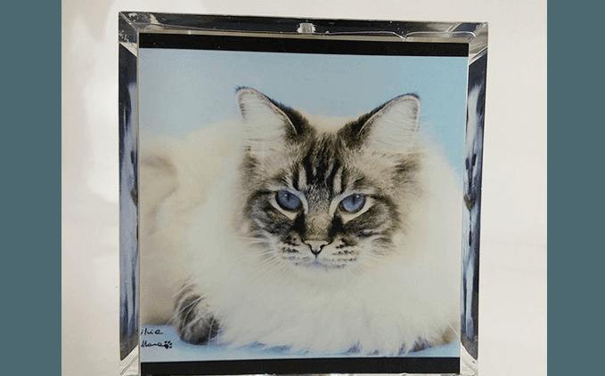 urna gatto pelo lungo