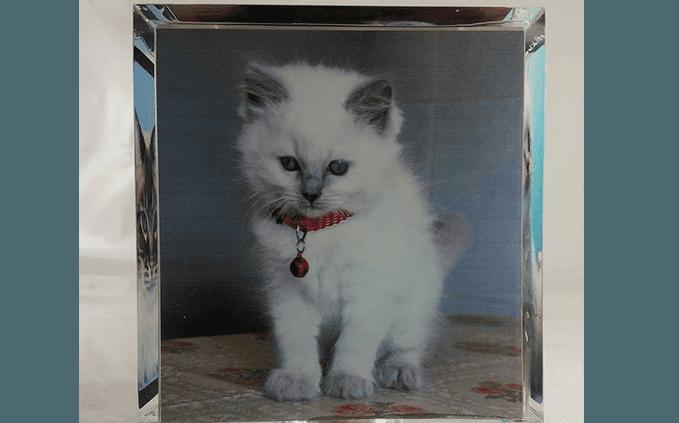 urna gatto