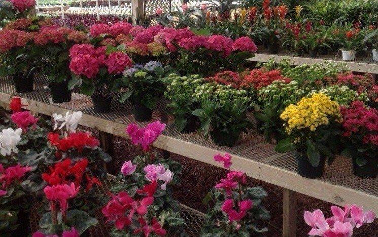 Garden Center Wilmington, NC