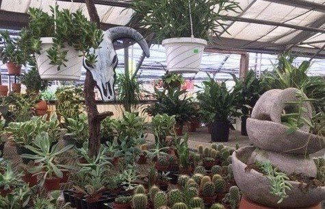 Bedding Plants Wilmington, NC