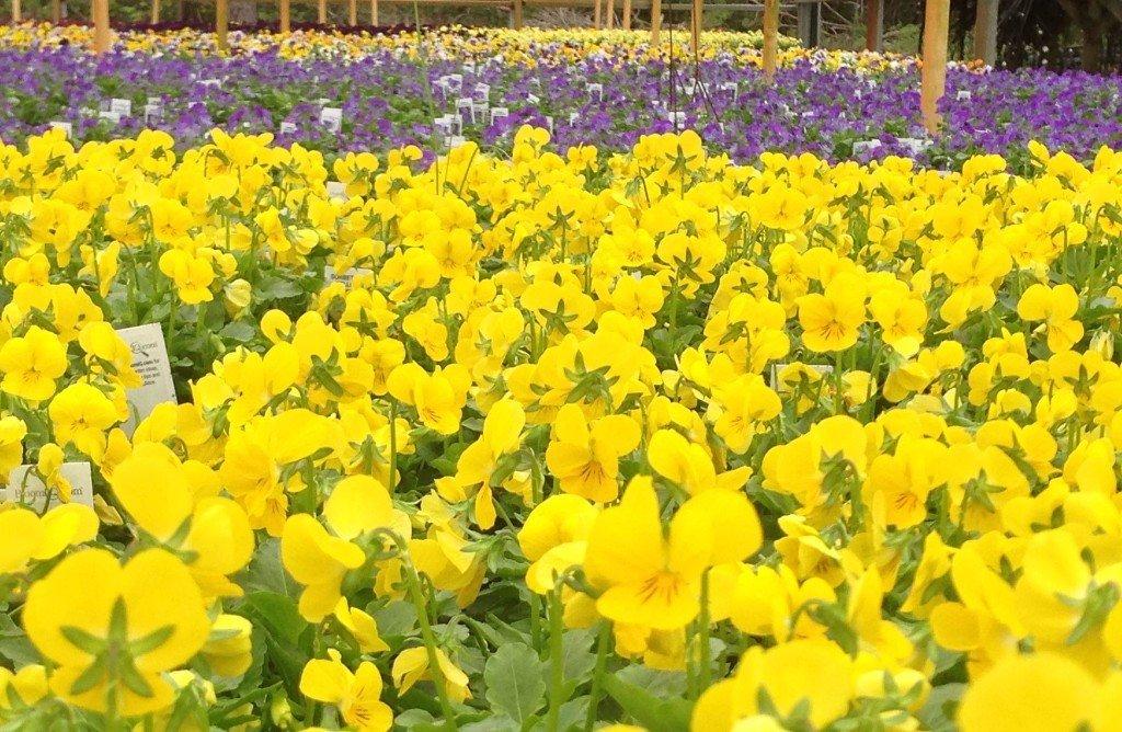Plant Greenhouses Wilmington, NC