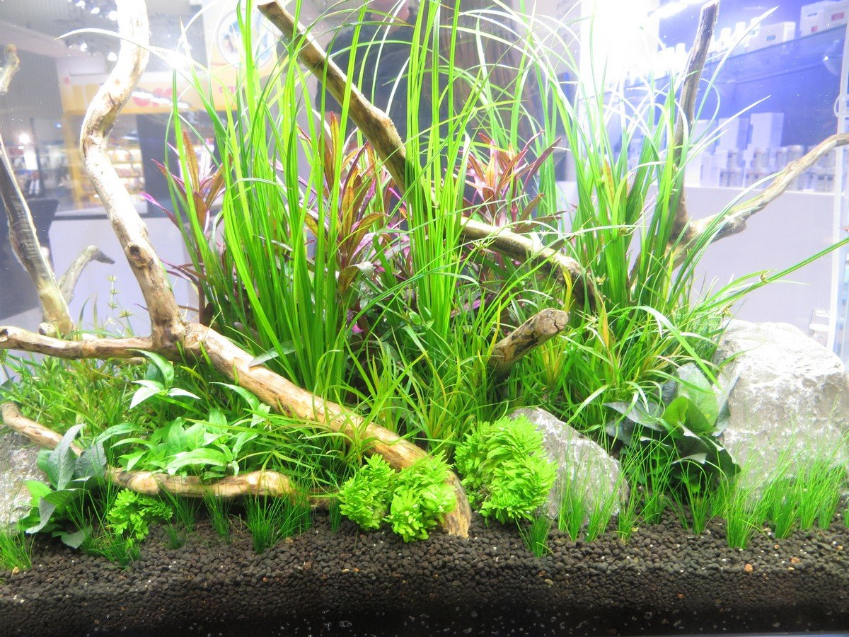 Piante per acquario genova l 39 acquario for Acqua acquario