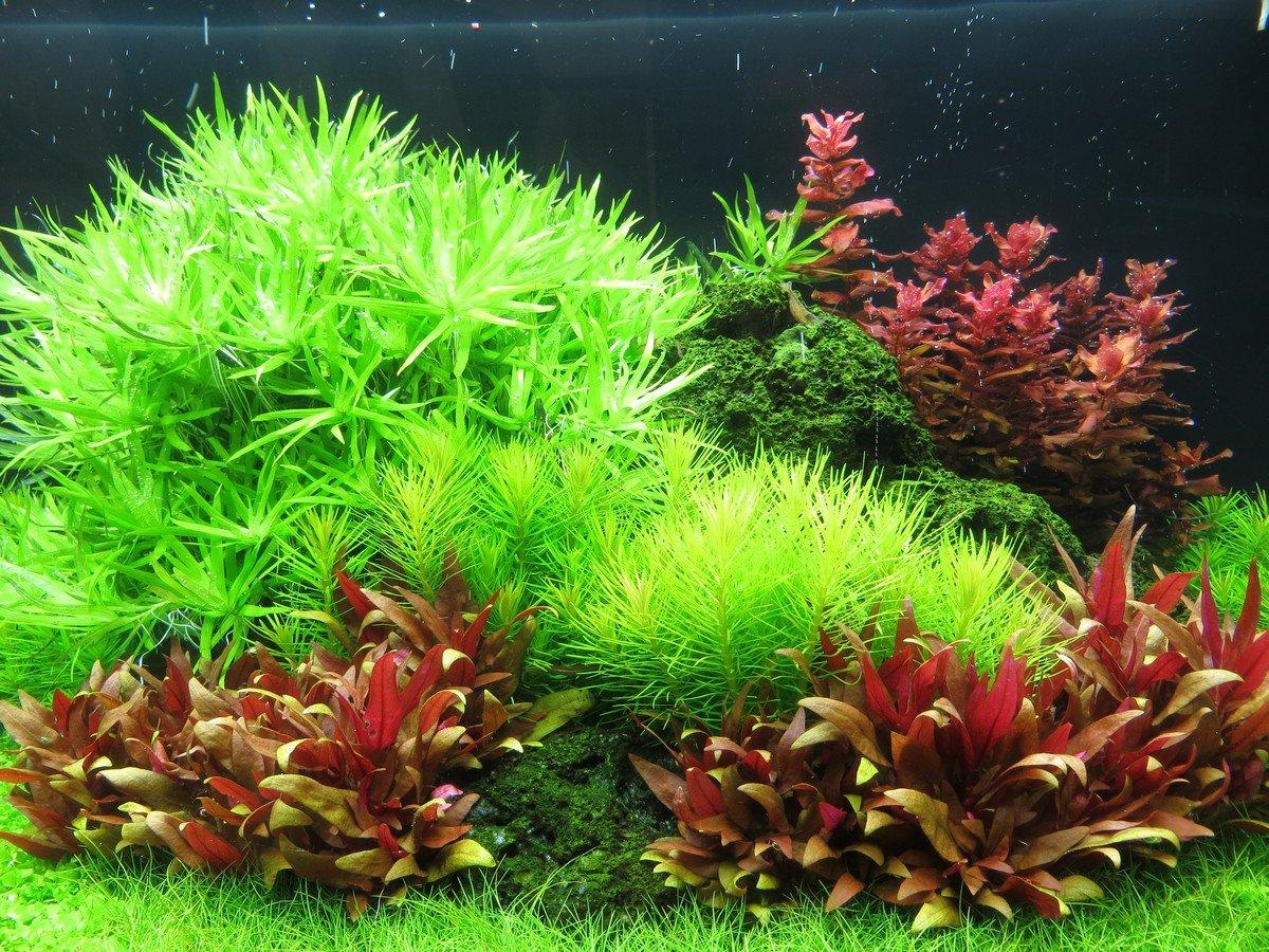 Vendita piante per acquario vendita piante acquario for Vendita on line acquari