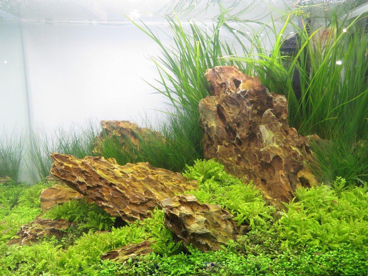 Piante per acquario acqua dolce Genova