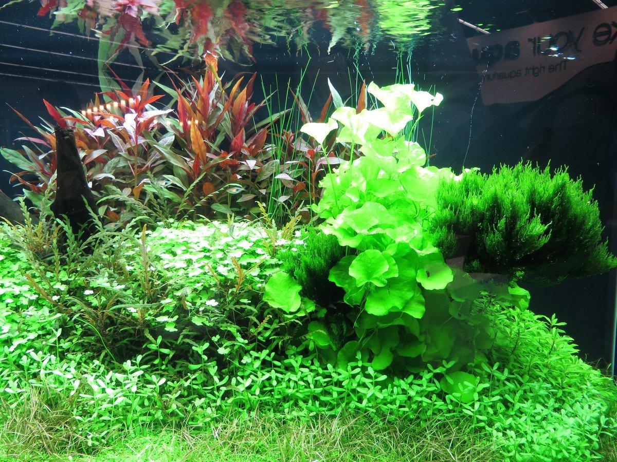 Piante per acquario genova l 39 acquario for Acquario per tartarughe acquatiche