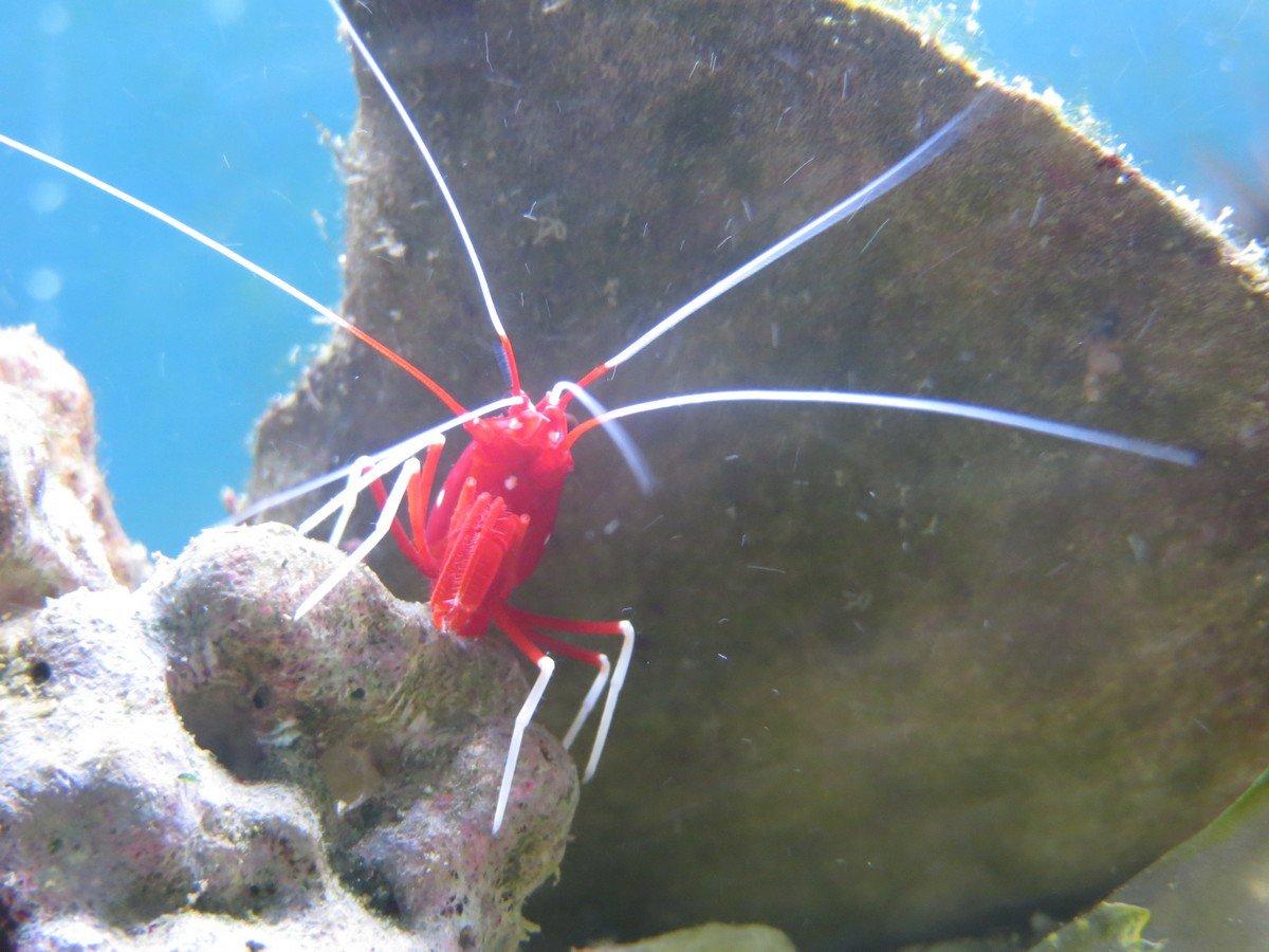 Pesci per acquari d'acqua marina Genova