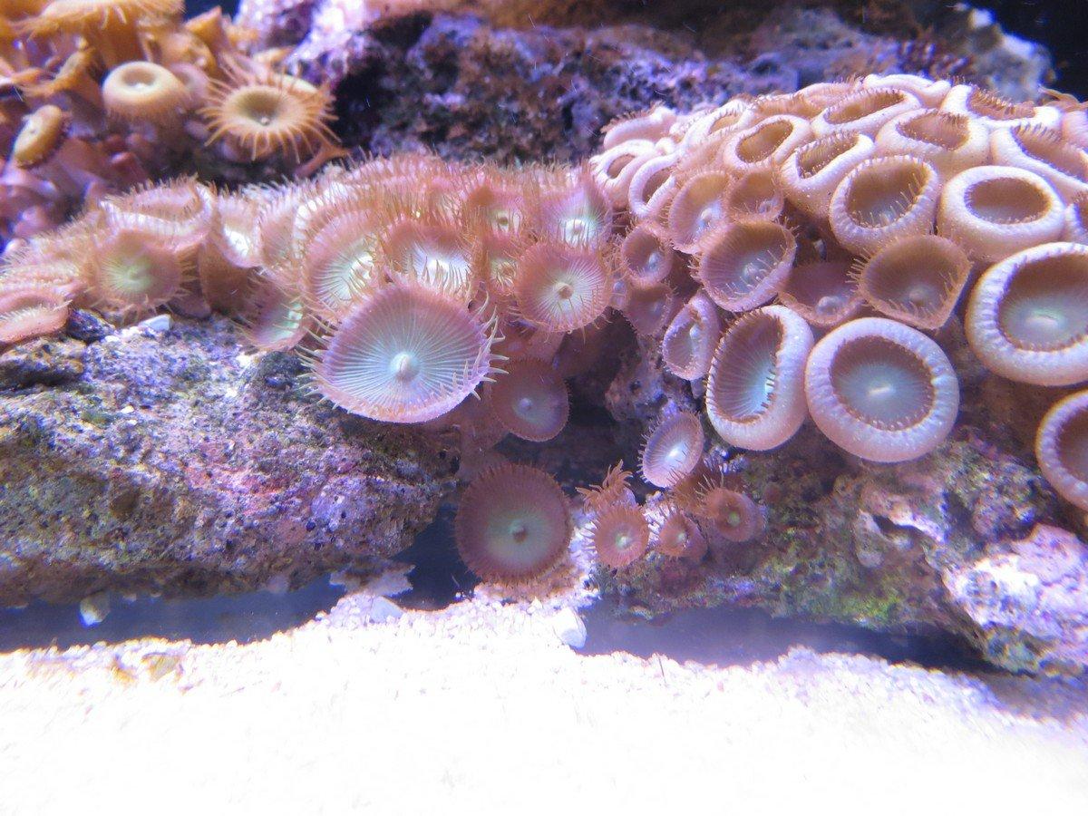 Invertebrati per acquari d'acqua marina Genova