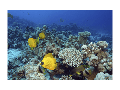 pesci acqua marina