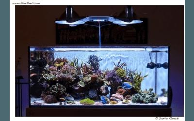 illuminazione acquario Elos