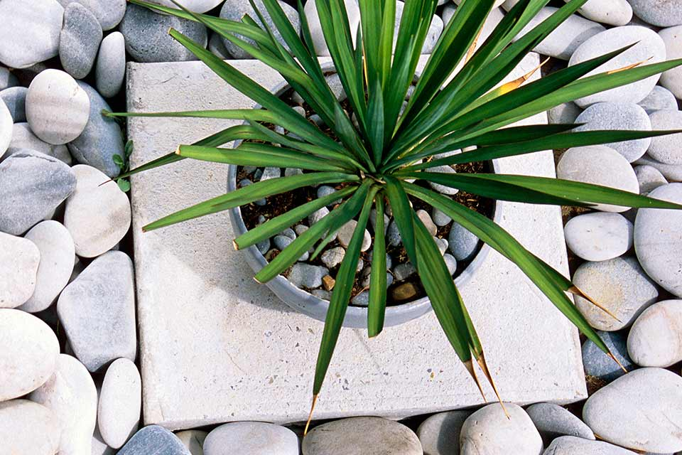 pebbles surrounding a plant in a modern garden