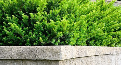 top of a retaining wall with green plants