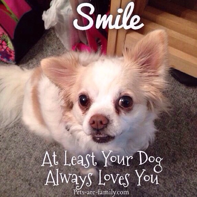 Smile No Matter How Bad Your Day Was Your Pets Will Always Love You!