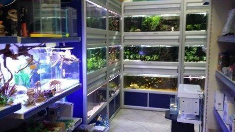 progettazione acquari