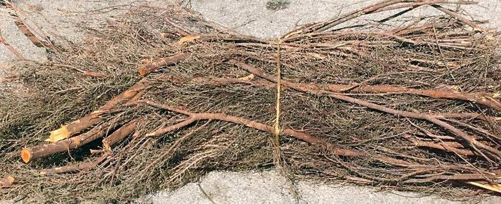 legna da ardere per pane cotto a legna
