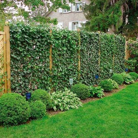 fencing and shrubs