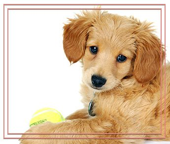 cute puppy with tennis ball