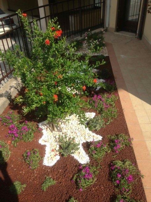 piante sempreverdi