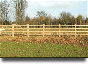 Newly put up fencing separates two fields