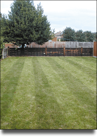 Perfectly cut lawn with fencing and nearly trimmed tree in the background