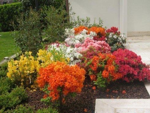 diverse tipi di fiori in un giardino