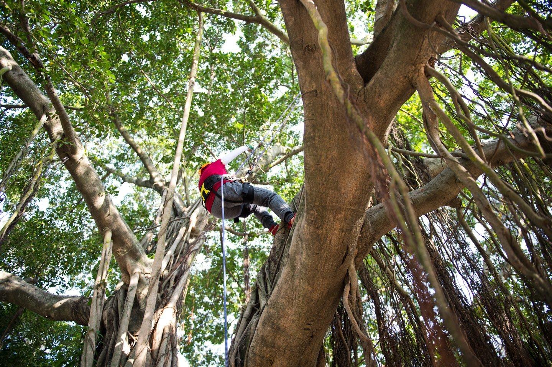 operaio mentre arrampica albero alto