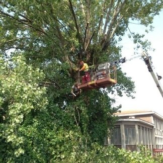operaio su un gru durante potatura albero