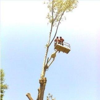 operaio mentre lavora con una gru per potature alberi sfondo cielo