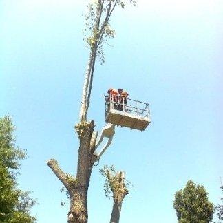 operaio mentre lavora con una gru per potature alberi