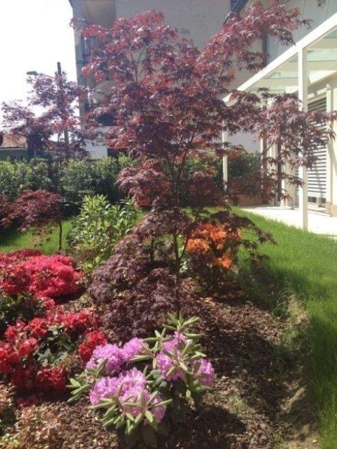 giardino davanti di case