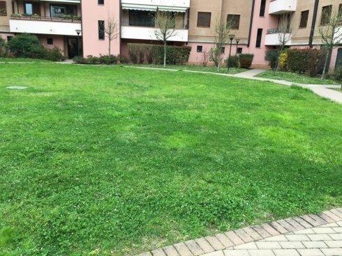 taglio erba in un parco
