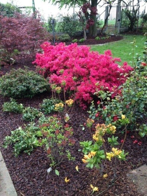 giardino con fiore rose e potatura di alberi