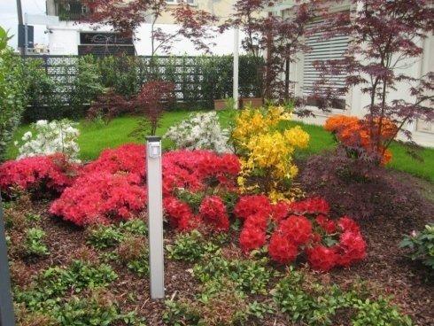 piante di fiori con colore rossa, gialla, bianca e arancia