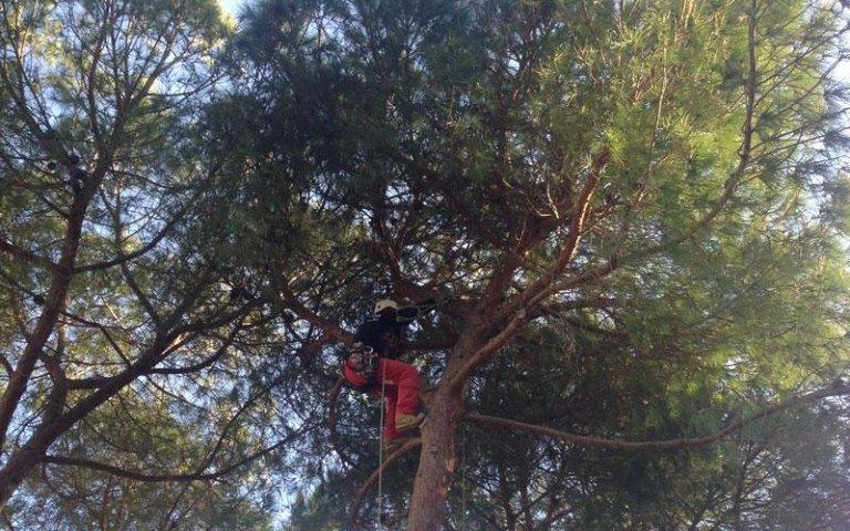 Potatura alberi con funi