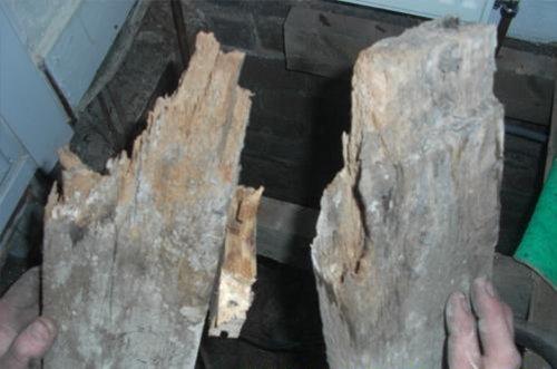 rot wood
