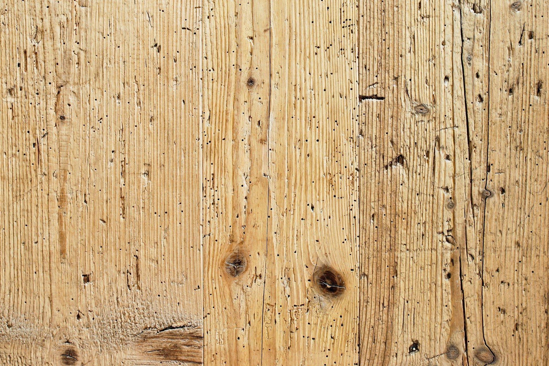 Woodworm Glasgow
