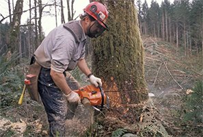 woodpecker tree services a person cutting tree using machine