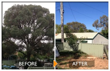 woodpecker tree services before and after felling a big tree