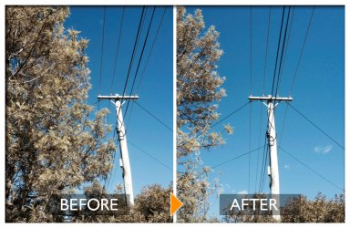 woodpecker tree services before and after powerline clearing