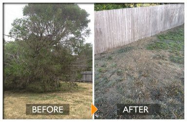 woodpecker tree services before and after tree felling