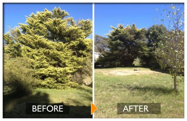 woodpecker tree services big tree before tree felling and more spaces after tree felling