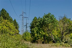 woodpecker tree services cutting in forest with electric power transmission line