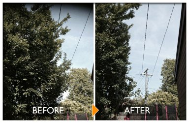 woodpecker tree services powerline clearing before and after