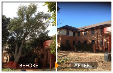 woodpecker tree services tree felling before and after near building