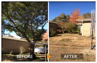 woodpecker tree services tree felling before and after near small building