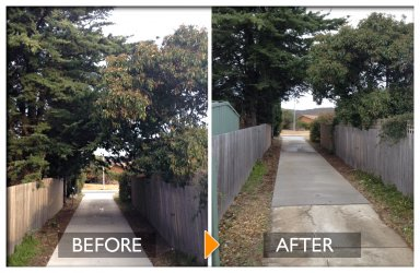 woodpecker tree services tree pruning before and after by trimming leaves